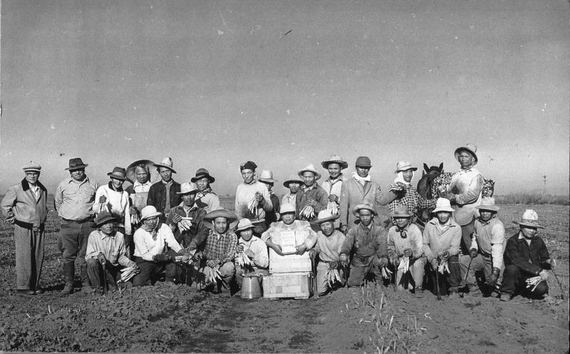 Asparagus Farmers