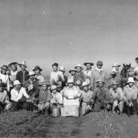 Asparagus1950.tif